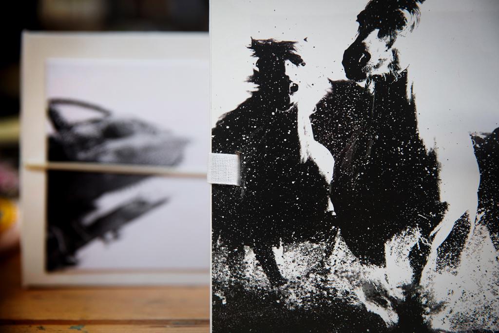 cartotecnica-fantasy-cavallo